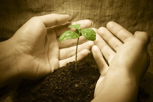 Shutterstock 9516388 Hands Under Seedling